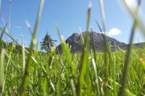 Dal Monte del Ginepro